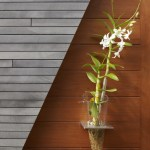 One of the many orchids that line the exterior corridor (Images Courtesy Benny Chan)