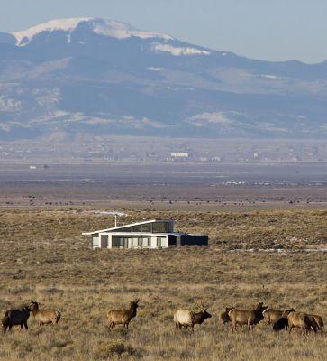 Crestone elk (Images Courtesy Bill Ellzey)