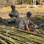 Image Courtesy © Pasi Aalto, Local workers preparing bamboo for the facade.
