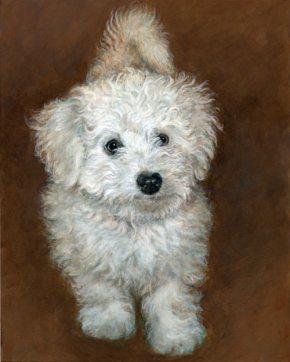 Fluffy bichon portrait
