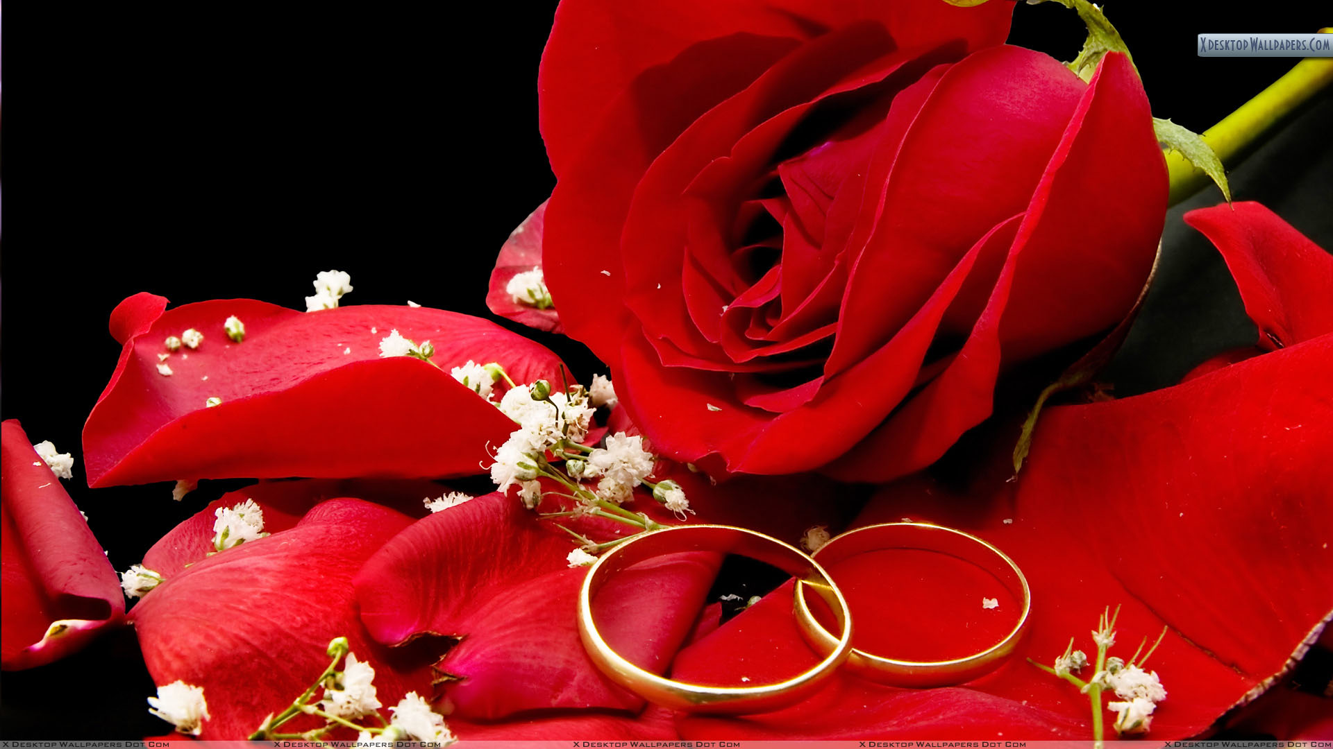 wedding rings with red rose and water rose wedding ring Two Wedding Golden Rings With Red Rose 05 Dec