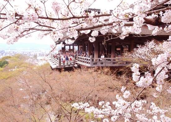 清水の舞台の桜