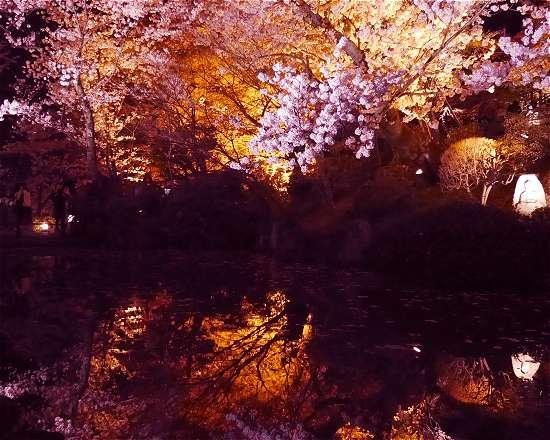 清水寺桜ライトアップ見どころ