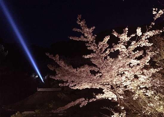 清水寺 サーチライトと桜