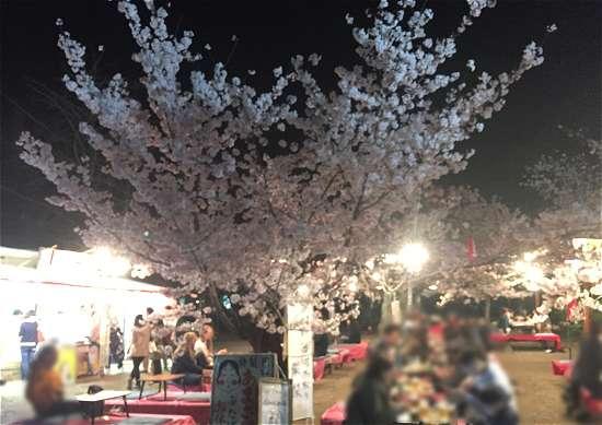 円山公園 夜桜宴会