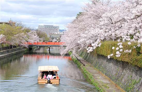 岡崎の桜 船