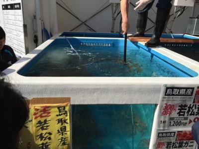 大阪 中之島漁港 中之島みなと食堂 いけす 魚