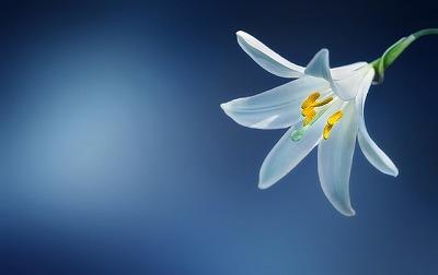 s-flower-729514_640