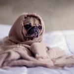 不眠症には種類がある!?4つのタイプと自分でできる対策方法
