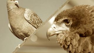 海外FXブログ「鷹は強さ・鳩は平和の象徴。タカ派・ハト派とは?」