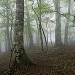 FX初心者は、まず「木を見て森を見ず」から抜け出そう!