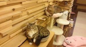 ゆる猫 画像