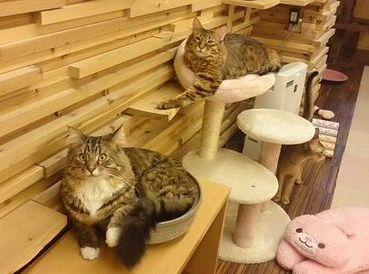 【大阪】堺の猫カフェなら『ゆる猫』 料金や特徴は?