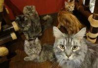 【大阪】 なんばの猫カフェならココがオススメ♪