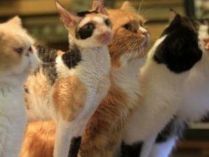 猫の時間 営業時間