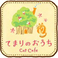 【吉祥寺】 おすすめ猫カフェは『てまりのおうち』料金やシステム・特徴は?