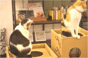 猫の里親制度