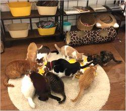 保護猫カフェ メニュー