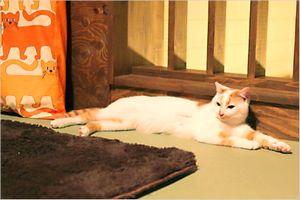 大阪の保護猫カフェ 『ネコリパブリック』紹介!営業時間は?