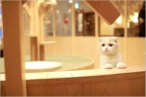 猫カフェ 渋谷
