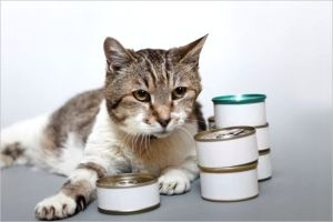【猫の病気】 食欲不振でエサを食べない!その原因や対処法は?