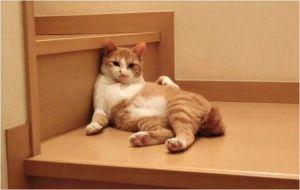 猫の熱中症対策や症状は?室温はどれくらいがベスト?