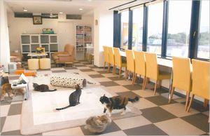 猫まるカフェ アクセス