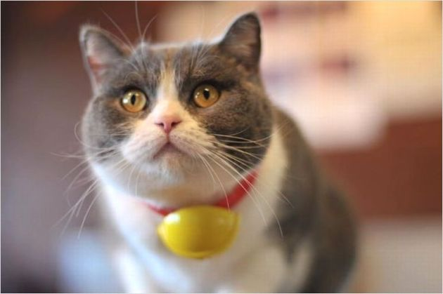 福岡の猫カフェ『美猫』が癒される!営業時間や料金について