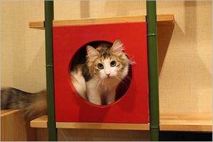 Cat cafe心猫