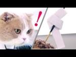 ネコ刑事とネコ怪盗の小話が激可愛い!潜入調査に証言VTR、取り調べ等ねこ網羅