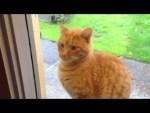 拾ってぇ!窓外から切ないアピールする茶トラ野良猫。窓開けると…