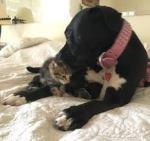 ワンコがソファで寛いでたら、ネコが尻尾で遊んでた
