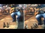 路上ライブを真剣に聴く子猫たちが超かわいい!話題沸騰