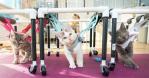 障害を抱える猫達!ボランティアの方々がとった行動が大評判