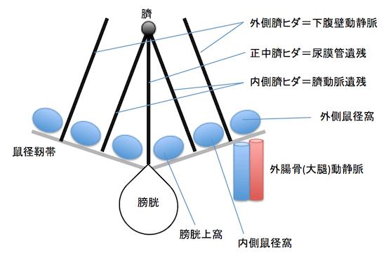 coroperitoneal