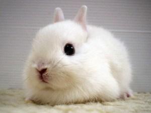 子ウサギ66