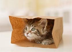 狭いとこ好き猫9