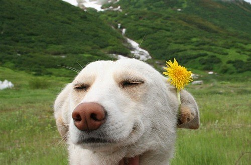 幸せそうな動物たち24