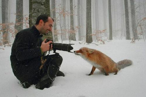 カメラマンと仲良くなってしまった動物達8