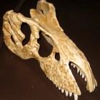fosil-craneo-tiranosaurio-rex-copia-0