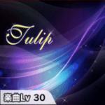 Tulip(チューリップ)