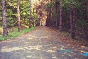 جانب من الغابة