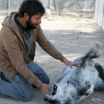 Playing with Contessa, a wolf dog, back in 2009.