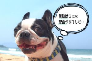 dog_training_008