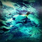 1日目 その6 ペンギンと猛獣と猛禽@旭山動物園