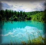 2日目 その2 美瑛の神秘的な青よりも青い池