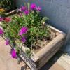 花壇に咲く花。一方、人は。。 #1766