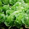 野菜の作り方 水やりのポイント