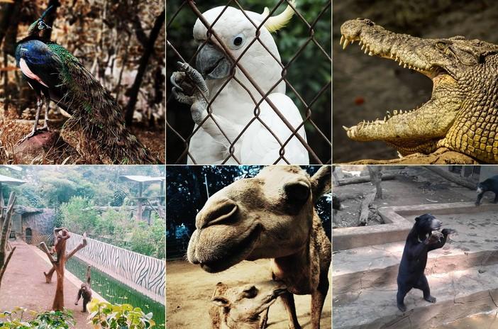 Koleksi Binatang Kebun Binatang Bandung