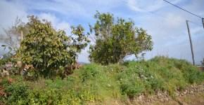 Terreno ideal para construir en la zona de Puntallana